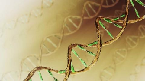 现代遗传学