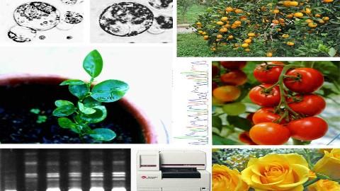 园艺植物生物技术